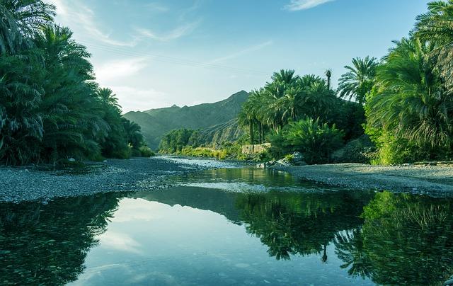 Oman water palmbomen